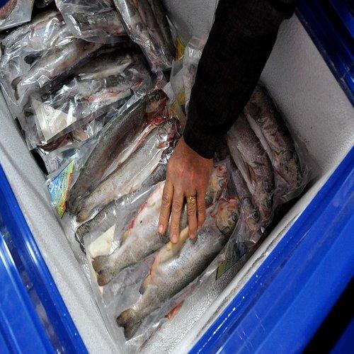 بسته بندی ماهی