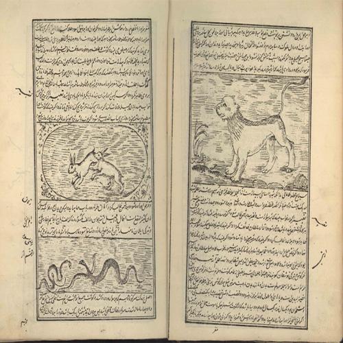خواص الحیوان